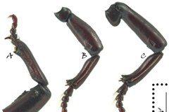拿習近平當哏命名新種甲蟲是否為政治嘲諷其實是個假議題