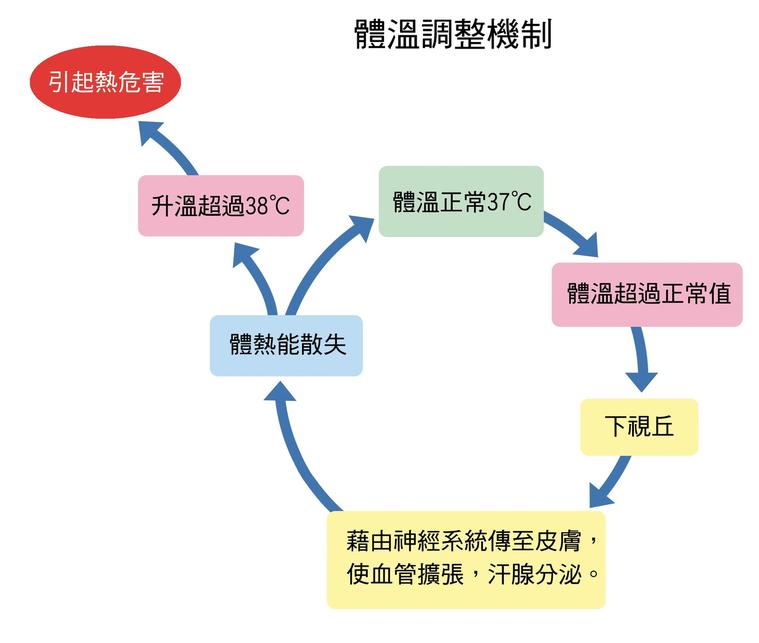 體溫調節機制 圖/朱柏齡提供