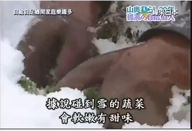 藏於雪中的高麗菜現身。圖/取自網路