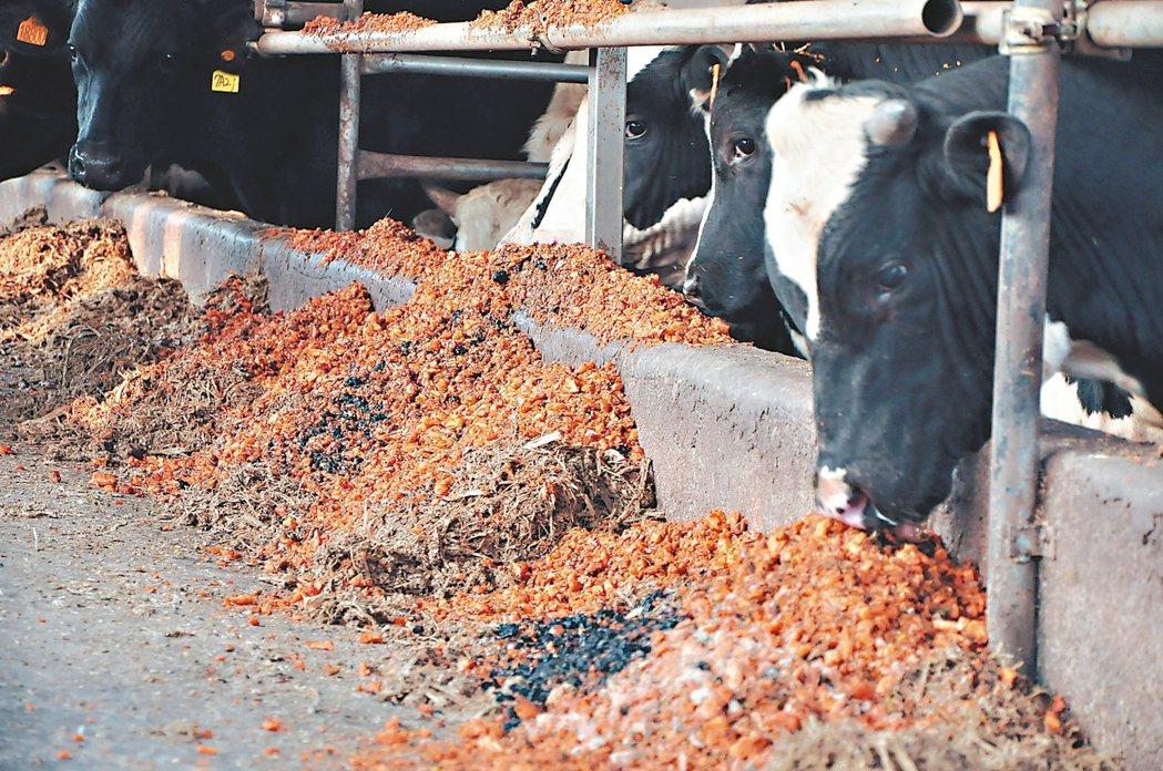 芸彰牧場以胡蘿蔔「格外品」養牛,創造牛肉新身價。 圖/斗南鎮農會提供