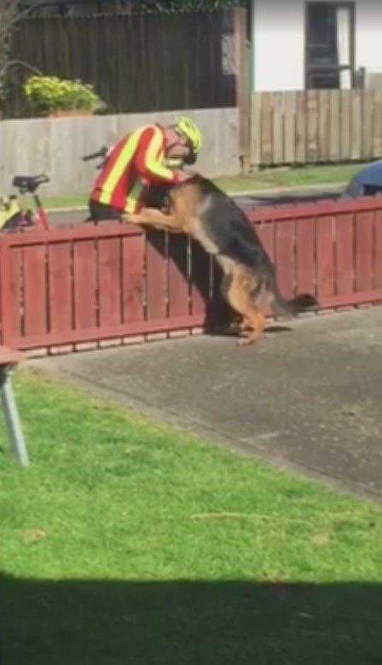 誰說郵差都怕被狗咬 隱藏攝影機拍下他們的甜蜜互動