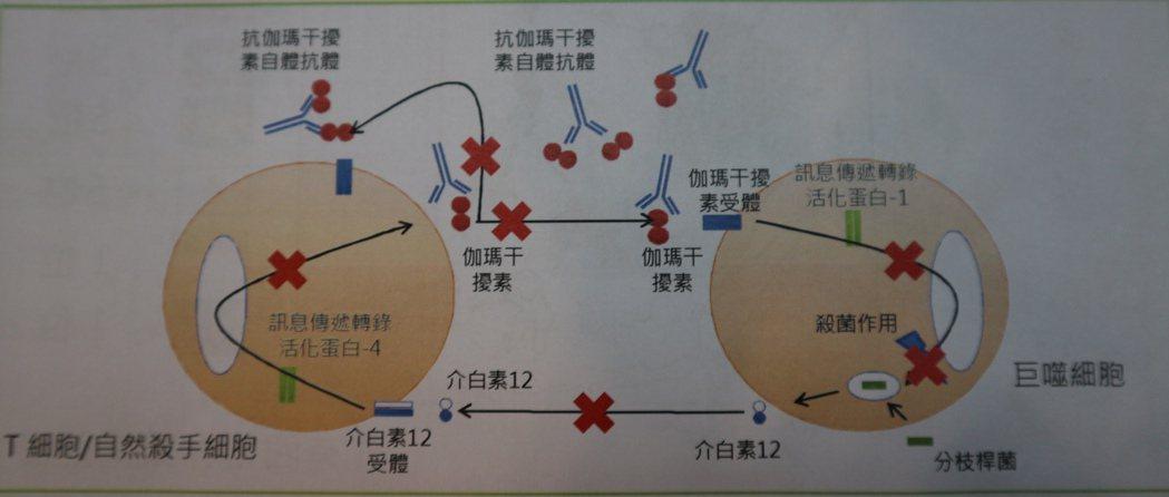 伽瑪干擾素與黴菌上的某種蛋白相當類似,抗體就以為該干擾素是外來黴菌,不斷攻擊它,...