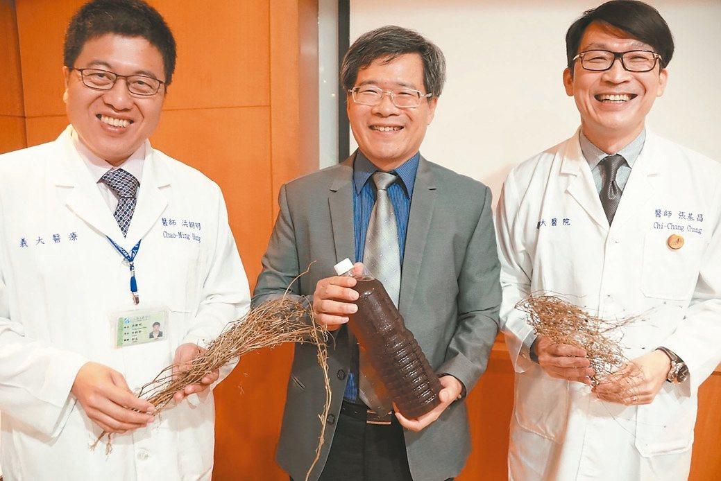 義守大學醫學院副院長洪哲穎(中)說,香茹在台灣也有種植,可當保健飲品。 記者徐白...