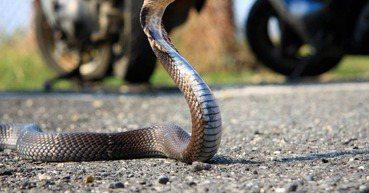換個單位處理或多買蛇勾能防止再被蛇咬嗎?