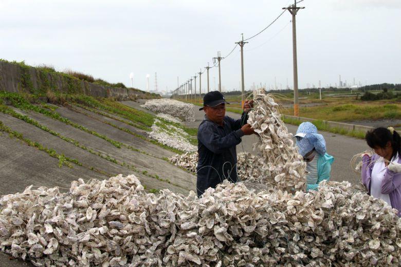 養殖業是雲林的傳統產業,蚵農帶著體驗學生協助,嘗試在六輕煙囪前,為自己的生計找出路。 攝影/蔡中岳