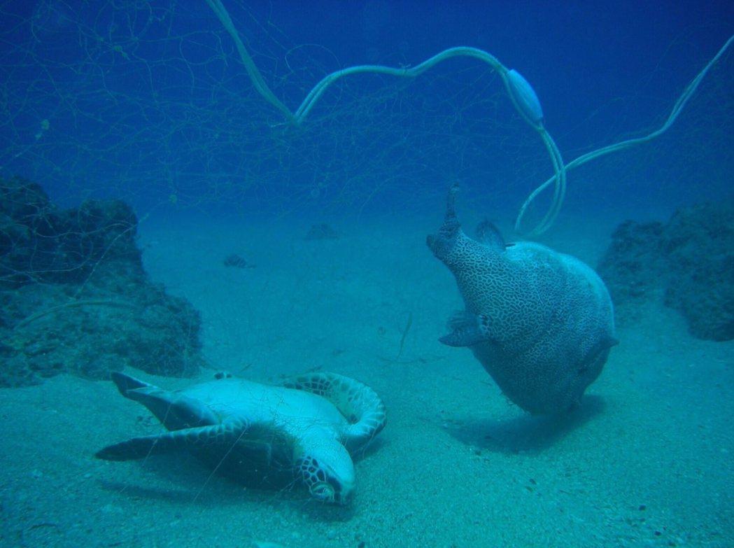 至今,已有超過兩百六十種的物種,被記錄到誤食海洋中的人造垃圾,以及被垃圾纏勒,甚...
