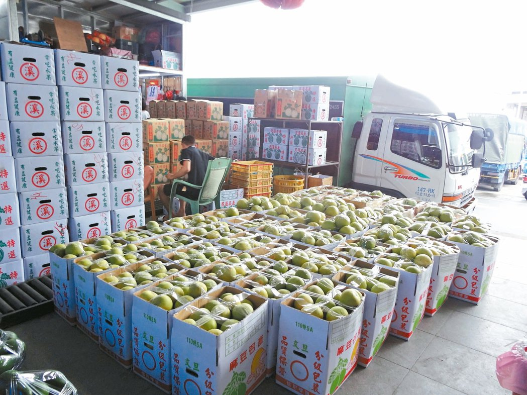 圖為嘉義文旦柚出貨。 報系資料照