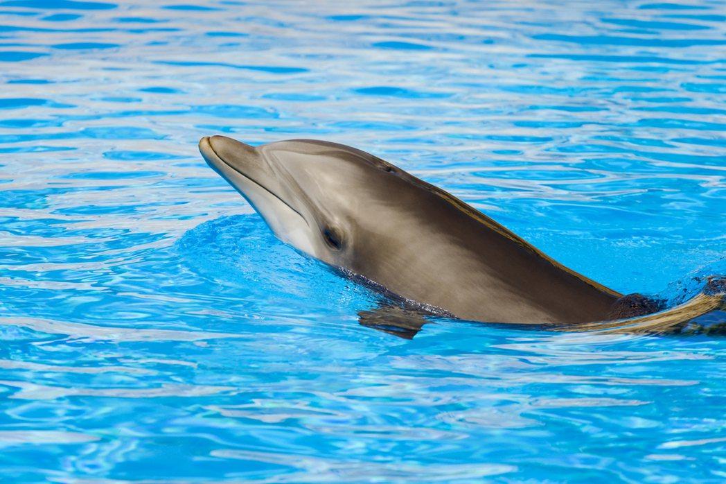 海豚型睡眠者—普通淺眠。 圖/Ingimage