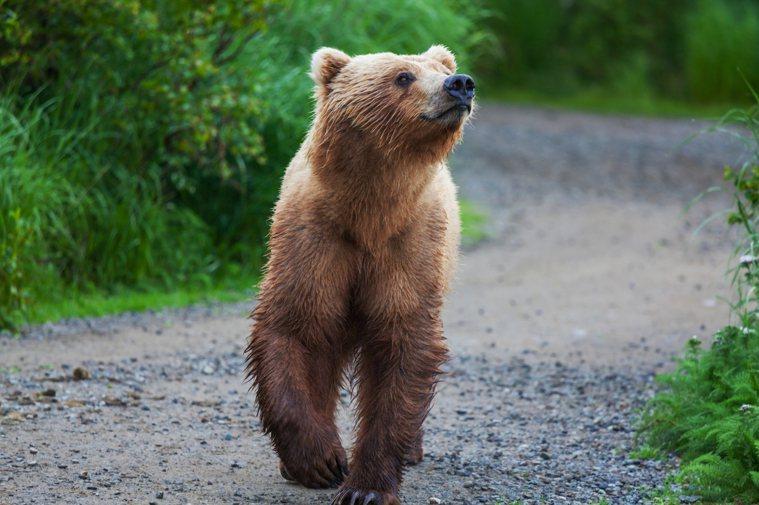 熊型睡眠者—作息標準。 圖/Ingimage