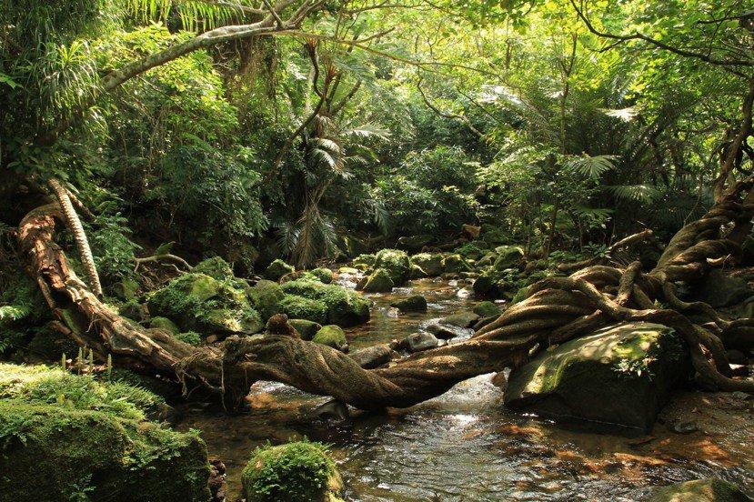 西表島九成以上地區被原始叢林覆蓋,紅樹林與亞熱帶植物交錯,也讓西表島被稱為日本的...