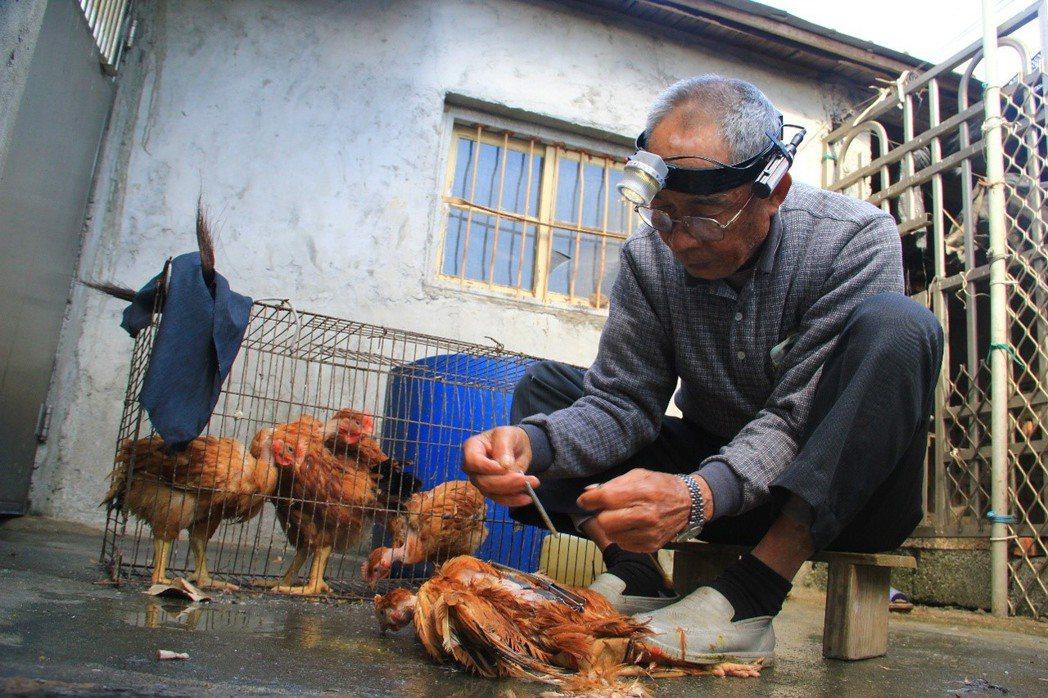 徐筠如、徐珮瑄及徐孟琪的阿公是台灣所剩不多的閹雞師傅,也是花蓮唯一的一位。圖/教...