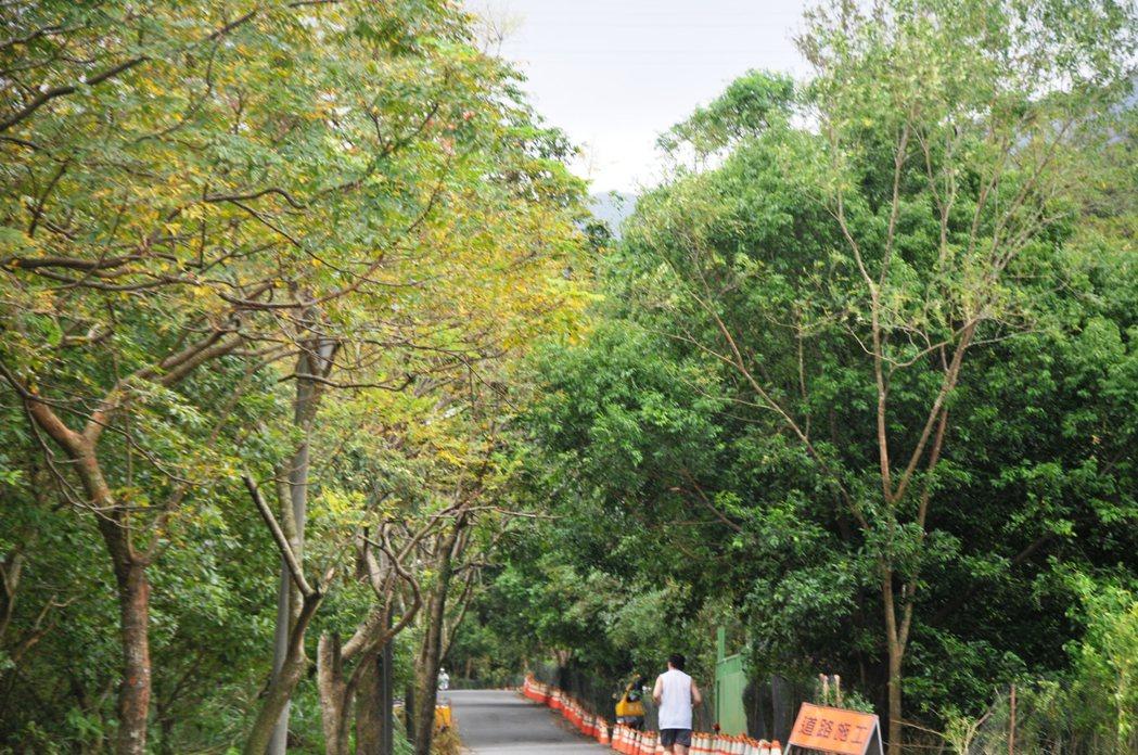 暖暖綠色隧道前半段被毀,只剩後半段綠林。記者游明煌/攝影
