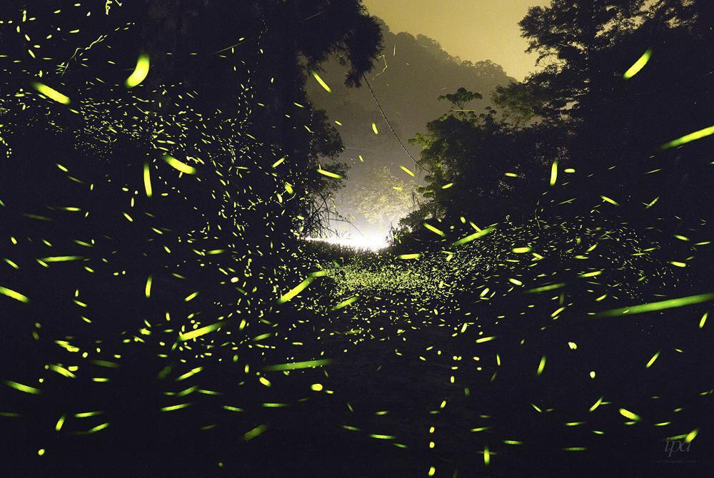 攝影者來自台灣的Kyo Chen,獲得夜晚攝影第三名。圖截自IPA官網。