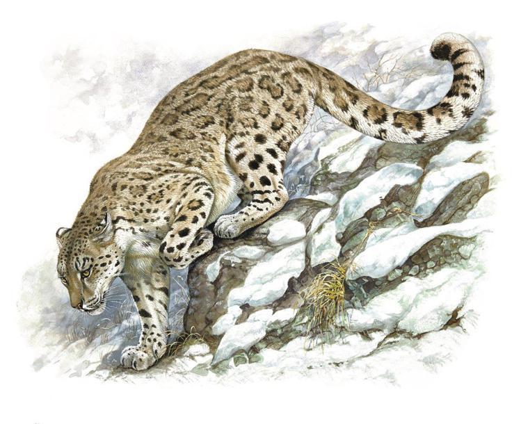 愛馬仕「野性與脆弱」畫展展出Robert Dallet的畫作,筆下的雪豹栩栩如生...