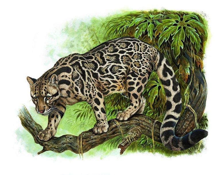 愛馬仕「野性與脆弱」畫展登台,圖為Robert Dallet的畫作「雲豹」。圖/...