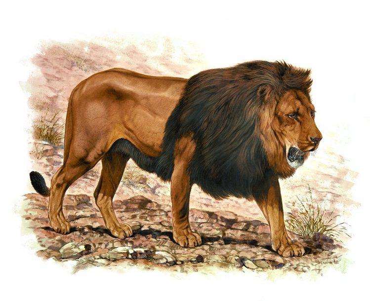 愛馬仕「野性與脆弱」畫展周六登台,展出Robert Dallet的畫作「雄獅」。...