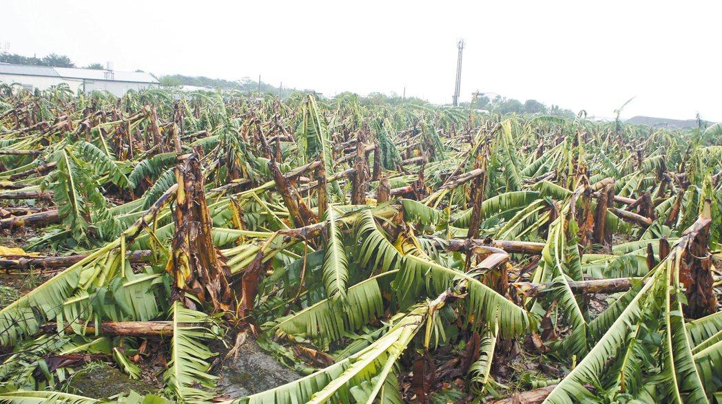梅姬颱風過後造成雲林嚴重災損,農民等不到縣府派員勘災,質疑從寬、從速都是假。 記...