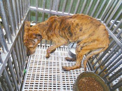 動保團體強調,PO出市屬流浪動物關愛園區瘦弱、生病的流浪動物,是為了讓動保人員給...
