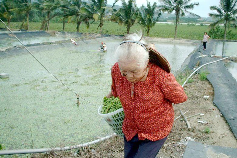 農村部門作為台灣社會的弱勢部門,如果無法從農村現場與農民現實處境來設想,正視台灣農村與南洋社會已建立起的緊密社會網絡,未來農村究竟會怎麼發展?誰也不知道。 攝影/記者黃鳳仁