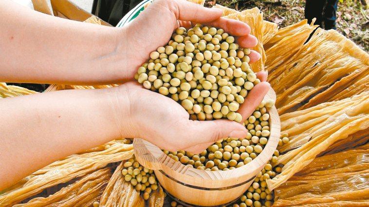 基改黃豆。 報系資料照