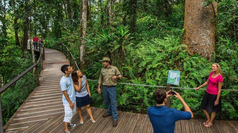 專業雨林解說員導覽雨林生態。圖/澳洲昆士蘭州旅遊暨活動推廣局提供