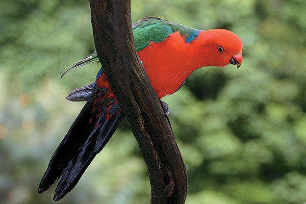 漫步雨林有機會見到許多繽紛多樣的動植物。圖/澳洲昆士蘭州旅遊暨活動推廣局提供