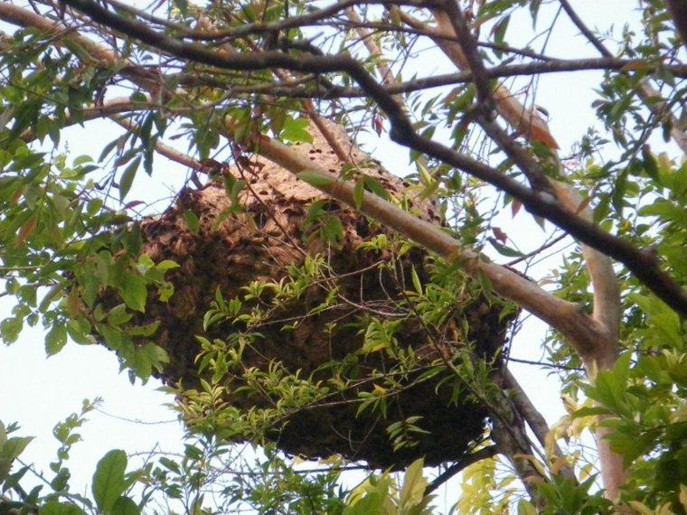 秋天是各類蜜蜂覓食過冬、特別活耀的季節,民眾外出、到山上活動,應該盡可能別穿太鮮...