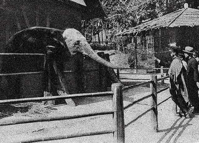 「動物慰靈祭」的圖片搜尋結果