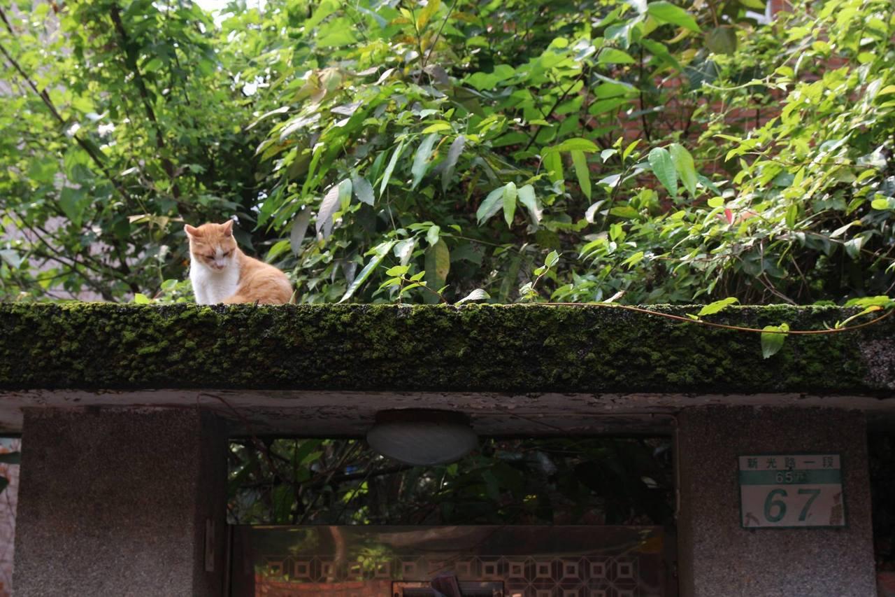 化南村貓「阿橘」是許多居民的記憶。圖/陳淑美提供