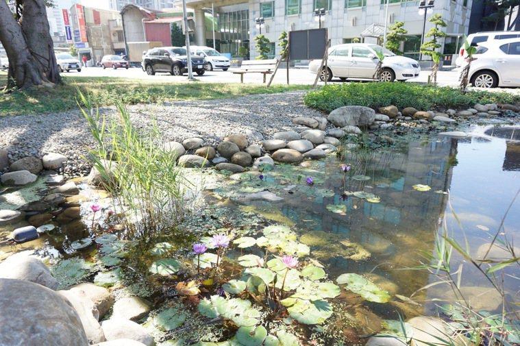 水生食物為都市增添趣味。 圖/朱慧芳