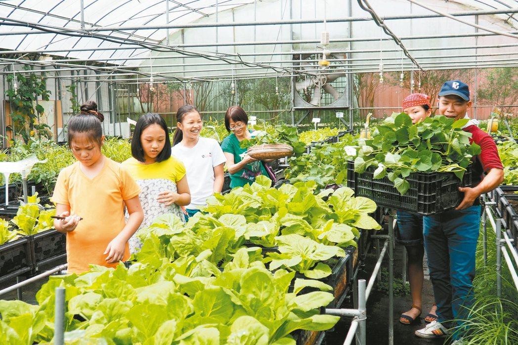 樂農生活志業公司引進「離地籃耕」栽培法,將農地「架高」,搭配特殊的「調理包」有機...