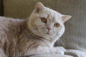 肥貓之所以是肥貓,在於公私不分