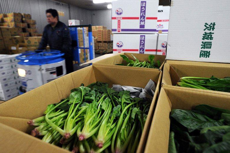 台灣全面禁止福島、茨城、櫪木、群馬及千葉等5縣受有輻射污染可能的產品輸入國內。圖為一批產自茨城的蔬菜。 圖/美聯社