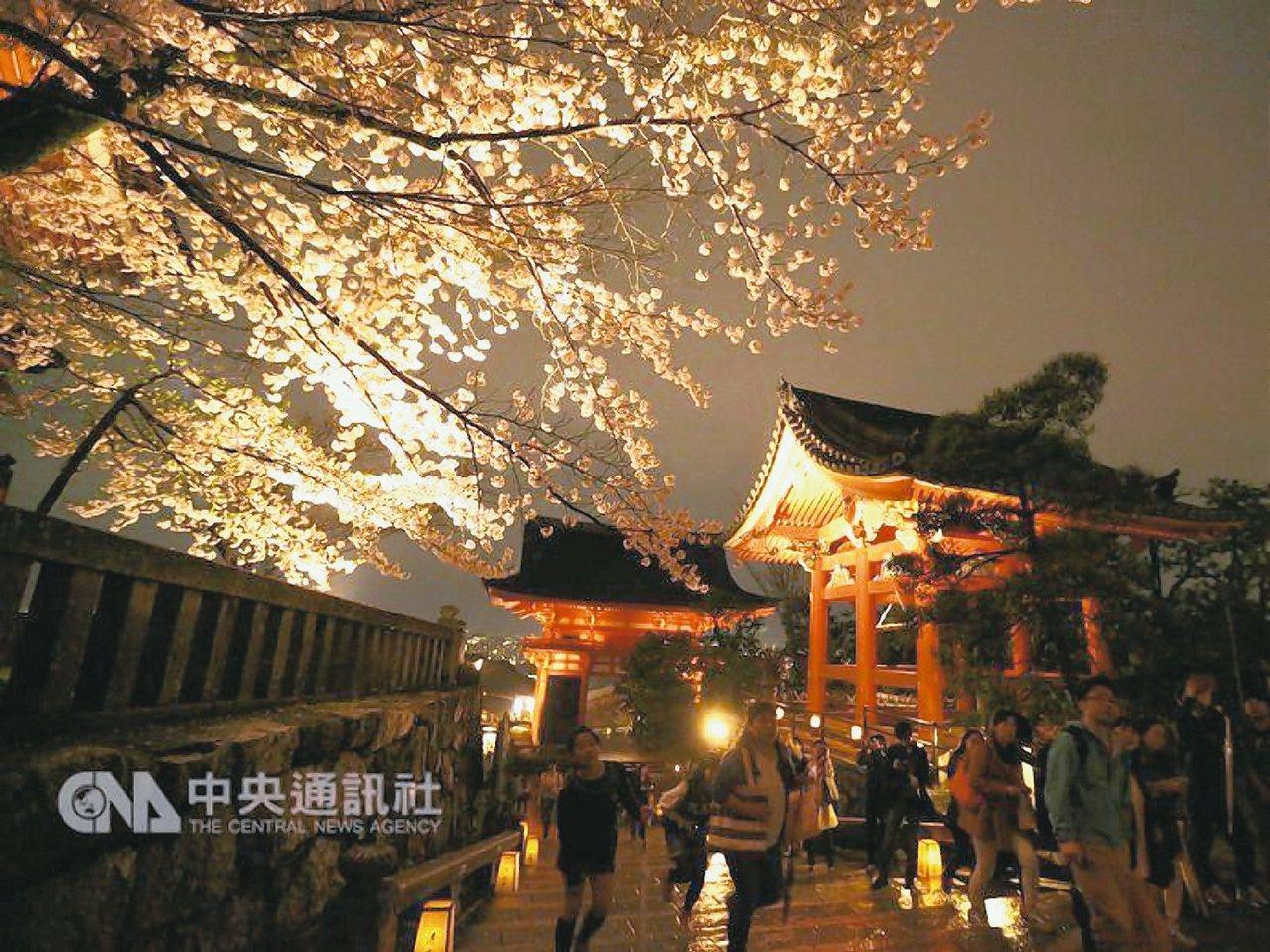 圖為清水寺的夜櫻。 中央社
