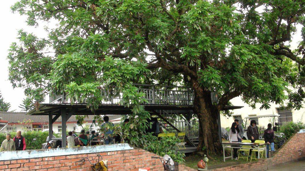 南華大學建景系學生將投入百年龍眼樹下微建築改造工程。記者謝恩得/攝影