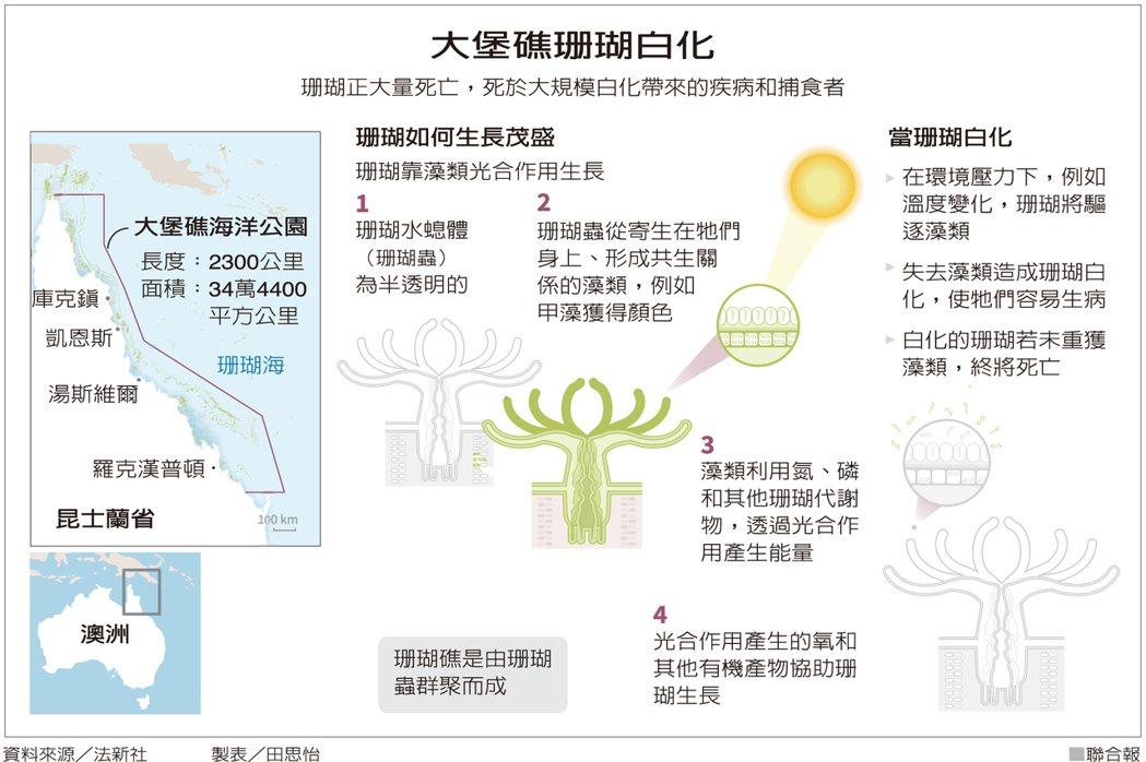 大堡礁珊瑚白化 資料來源/法新社 製表/田思怡