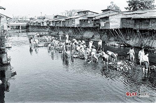 國民政府遷台後,大量湧入的移民因一時無處可居,便砍除柳川河畔的柳樹,沿著柳川河岸...