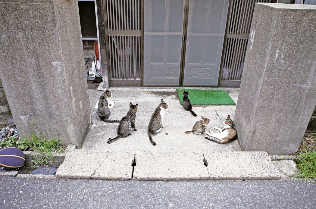 奇妙的是,占據右邊房子的貓咪,大多數是虎斑花色的。幾乎可以說,這裡根本就是「...