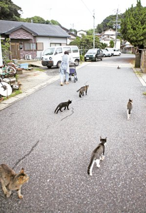 外出的奶奶與同行的貓咪們。 攝影/李龍漢