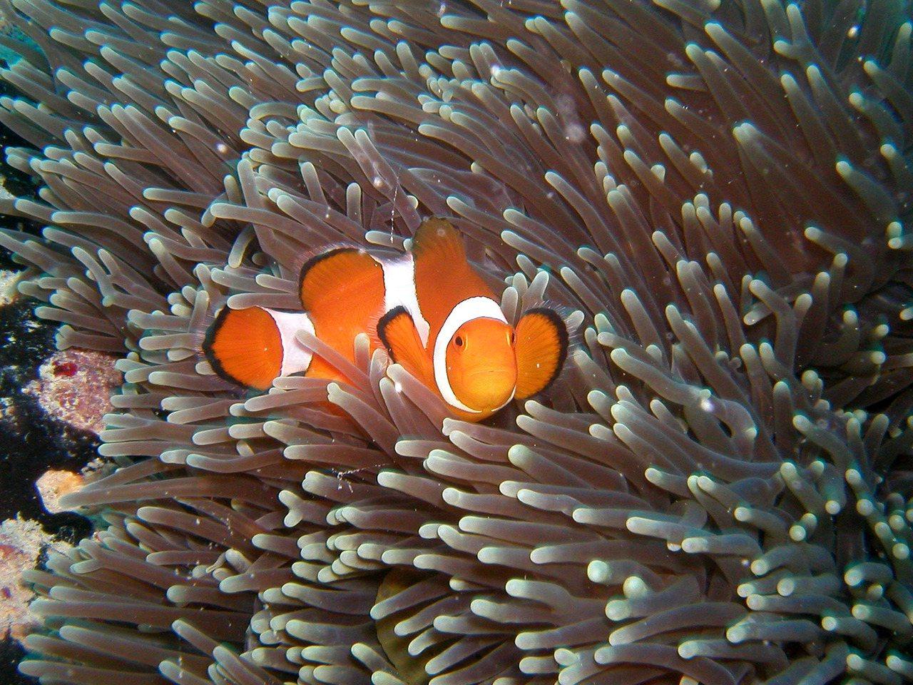 巴拉望是海洋保護區也是著名潛點,可看見豐富的海洋生物。圖/菲律賓觀光局提供