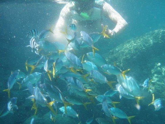 帛琉有世界級的海底景觀,長年不敗。圖/雄獅旅行社提供