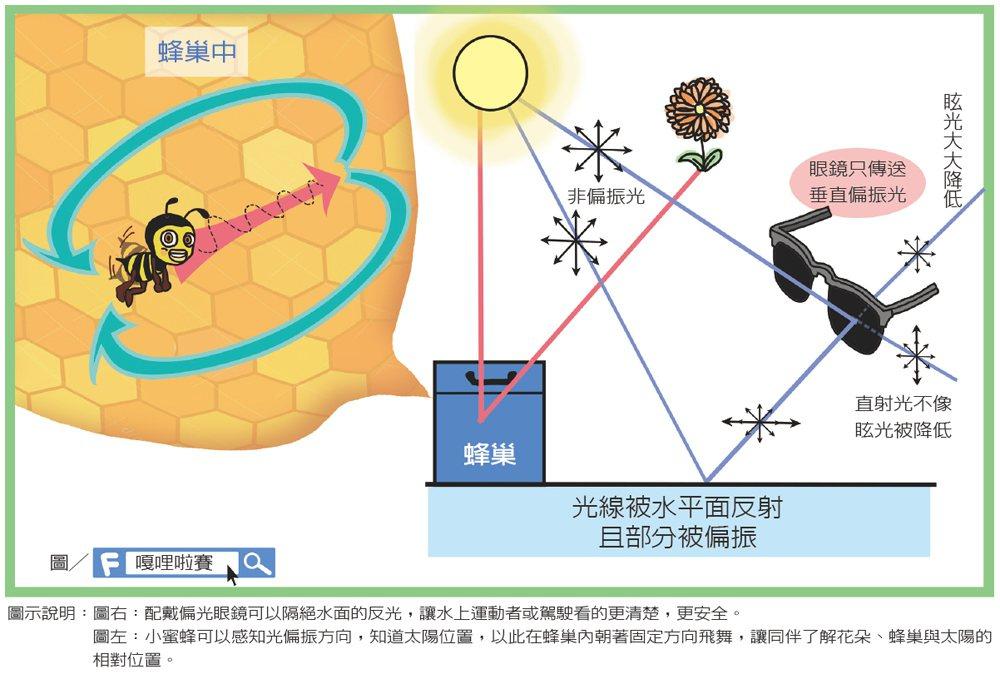 人類無法感受到光線偏振方向,但許多昆蟲卻擁有所謂的P視覺,可以使用P視覺來辨別方...