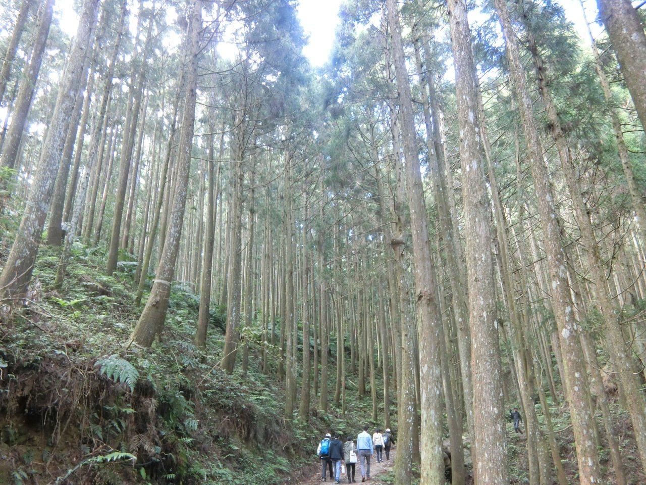 農委會將力推國產人造林生產的木材。 記者董俞佳/攝影