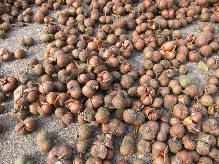 苦茶油是台灣近年來討論度很高的油品,而且常常被拿來跟地中海飲食的靈魂橄欖油拿來比...