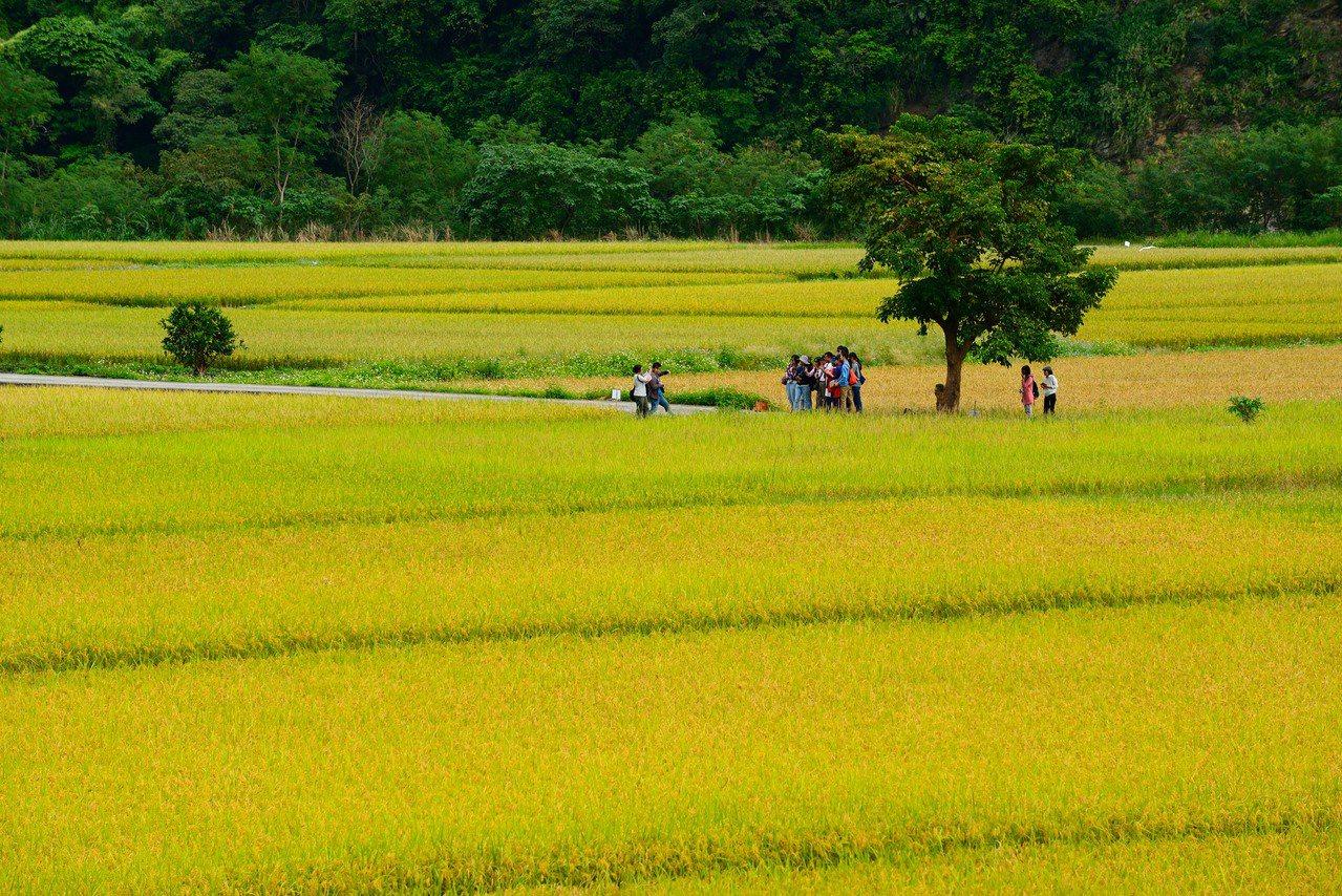 卓溪鄉南安部落金城武樹,作品為佳作陳其軒拍攝。圖/玉溪地區農會提供