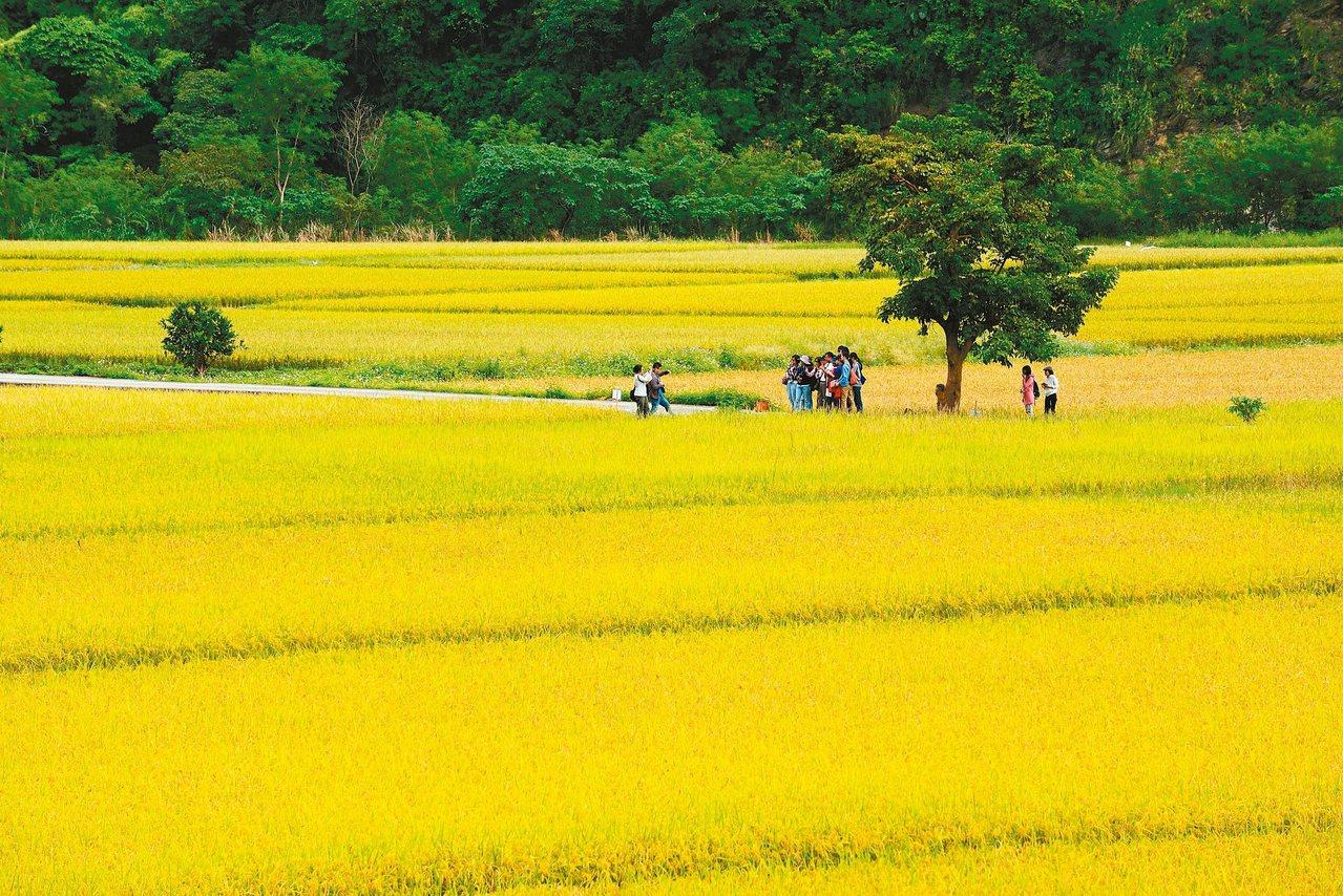 卓溪鄉南安部落的稻田一望無際,陳其軒拍的佳作。 圖/玉溪農會提供