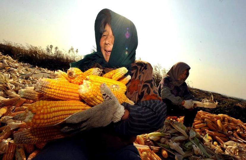 中美WTO貿易戰爭:美國在今年中向WTO提起訴訟,指責中國政府對中國國內小麥、大...