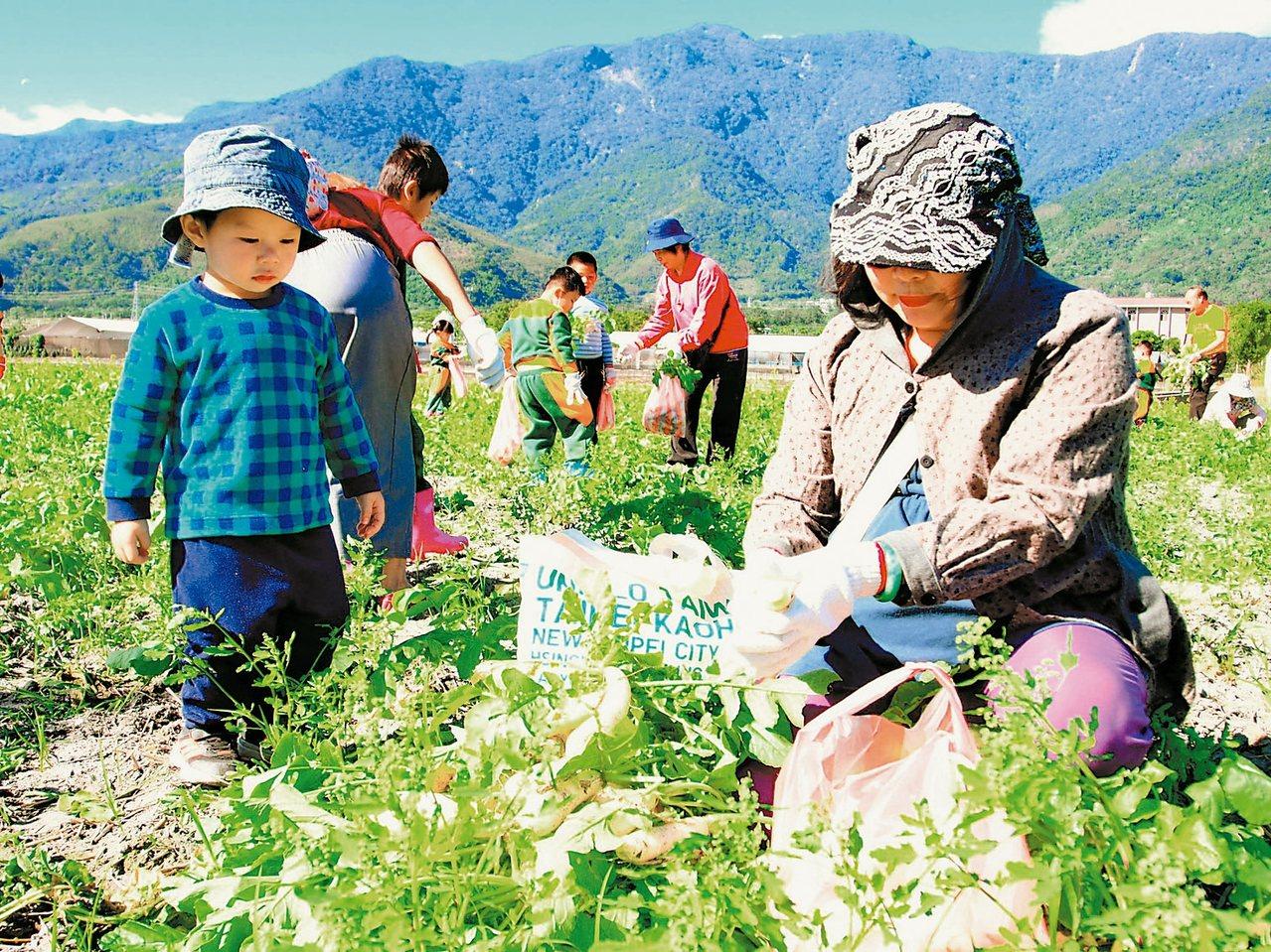 小朋友在家長的帶領下,下田體驗拔蘿蔔的田園樂趣。 記者潘俊偉/攝影