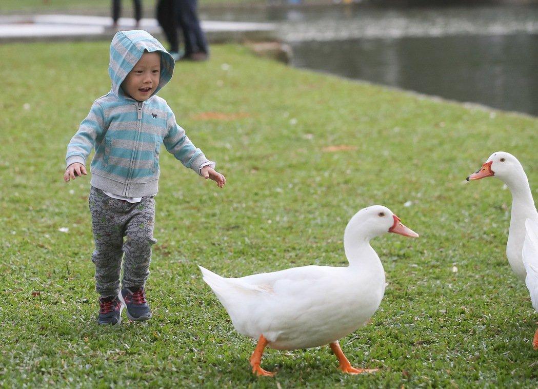 今天就是冬至,但台灣近日天氣溫暖,讓人感受不到寒冷的氣息。攝影/余承翰