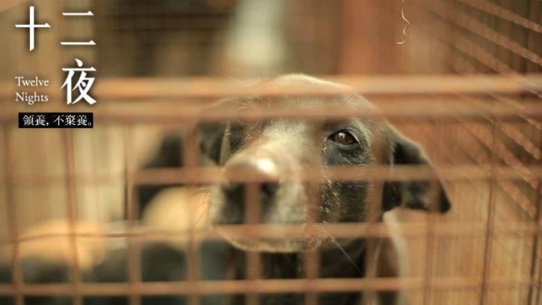 如果無法體認到動物與人和環境皆息息相關,號稱最「漂亮」的動保法只是徒具虛名。 圖/電影《十二夜》劇照